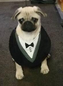 Dog tux bib